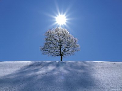 neige-arbre-soleil-ciel-bleu.jpg
