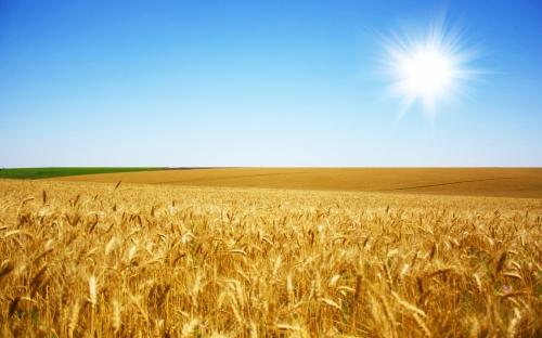FreeGreatPicture.com-8045-hd-wheat-crop-material.jpg